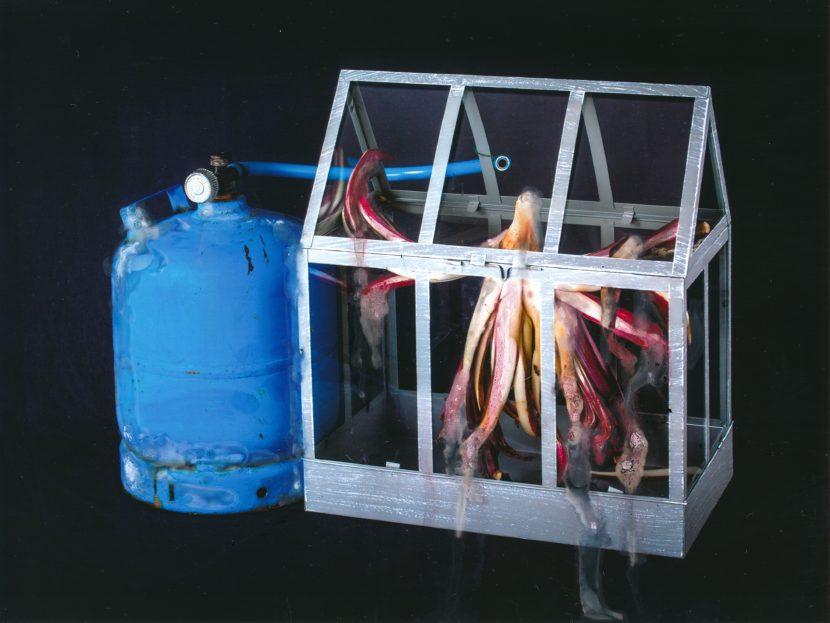 Suicide radicchio gas